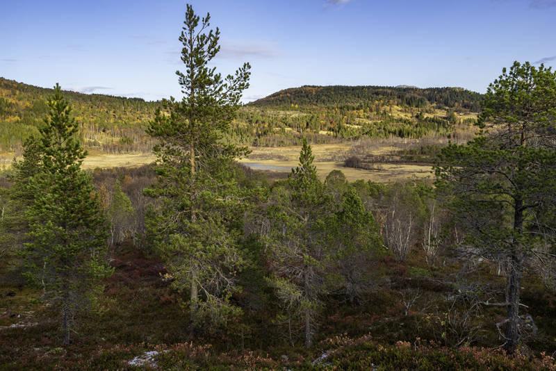 Utsikt fra gapahuken