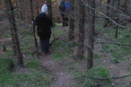 Stien kan være vanskelig å se, men hvor hjorten har gått er det mange knekte greiner - Foto: Ukjent