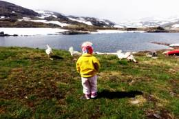 Den vesle jenta og tuppene - Foto: Marit Wøllo