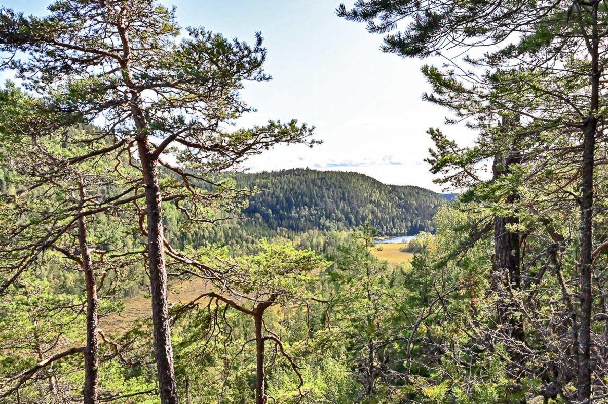 Utsikt til Søndre Ringkollen fra Hærfangen