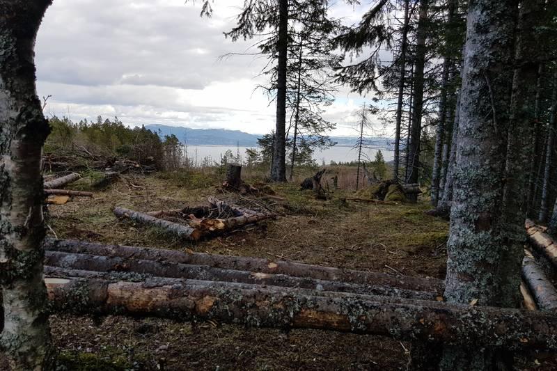 Fra toppen av Leistadåsen er det tatt ned mye skog slik at utsikten har blitt upåklagelig
