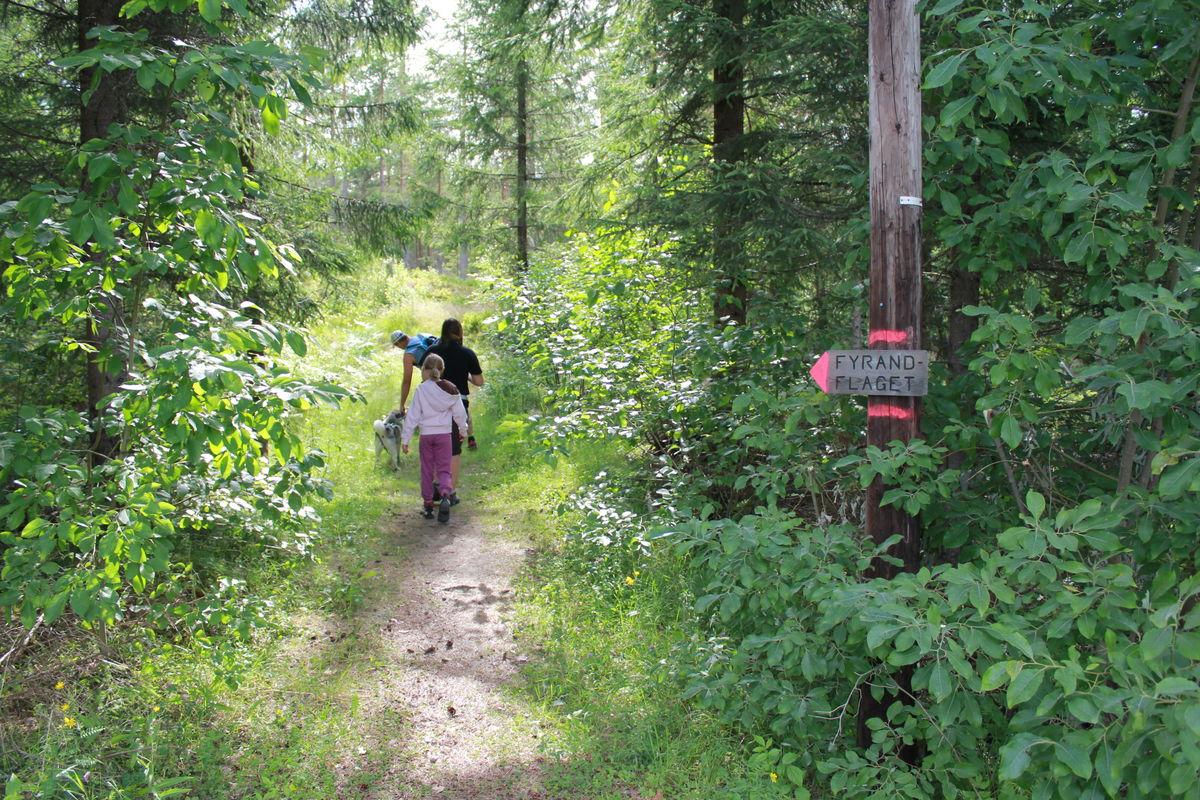 Stien starter i krysset i Skinnesmoen. Den er skiltet og rødmerket.
