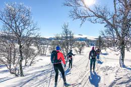 Nydelige skiløyper - Foto: Solveig Hjallen