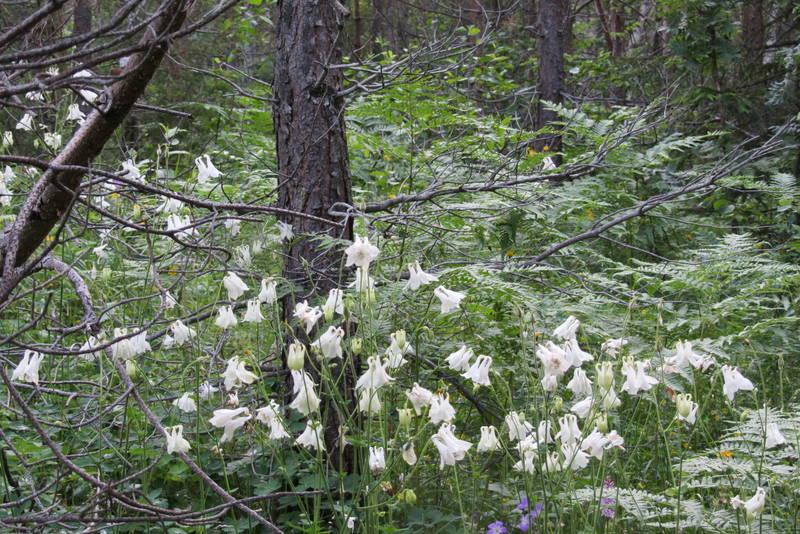 Flora i Bremsåsen naturreservat