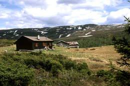 Høst ved Toveseter -  Foto: Drammens og Oplands Turistforening