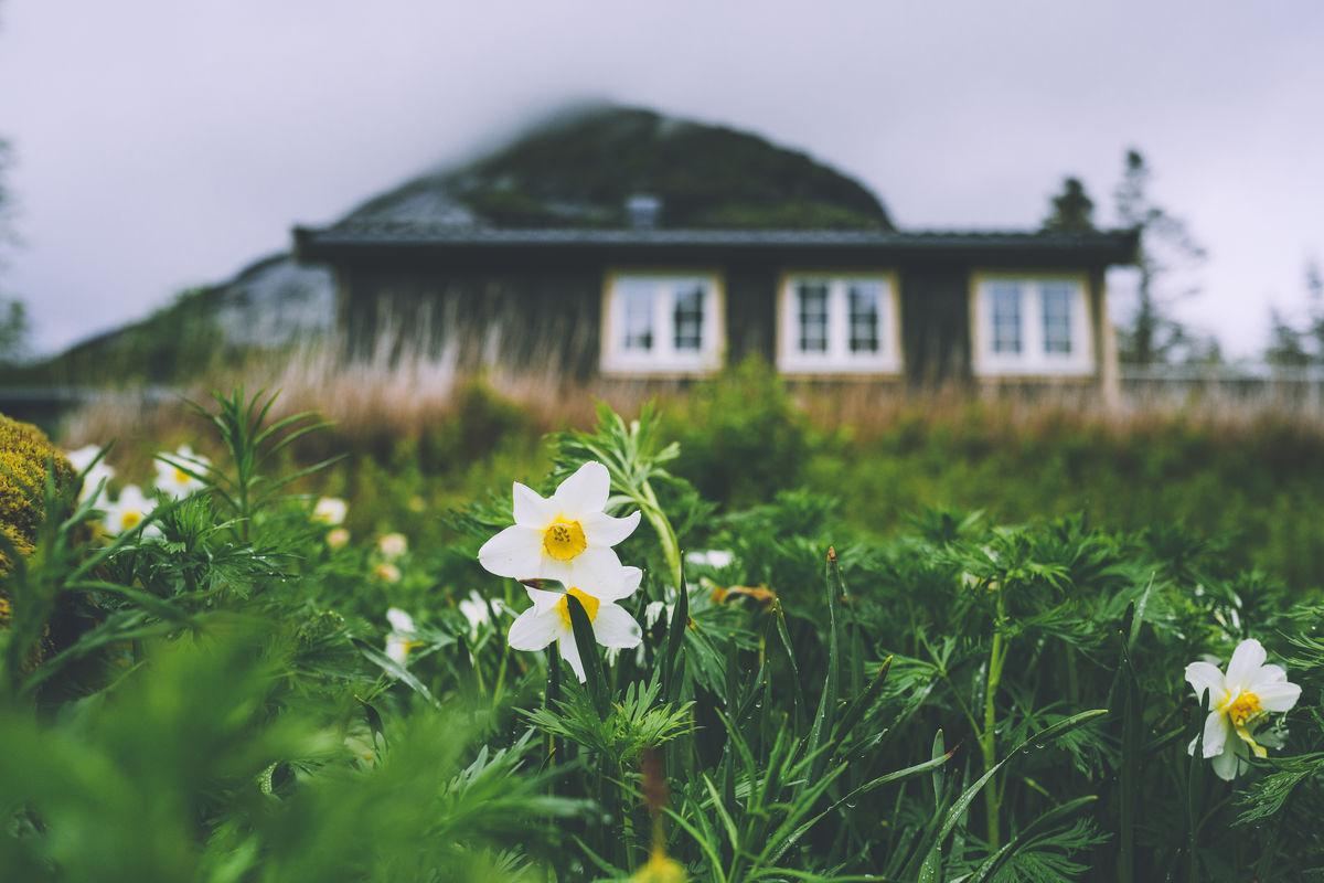 Blomstring ved hytta