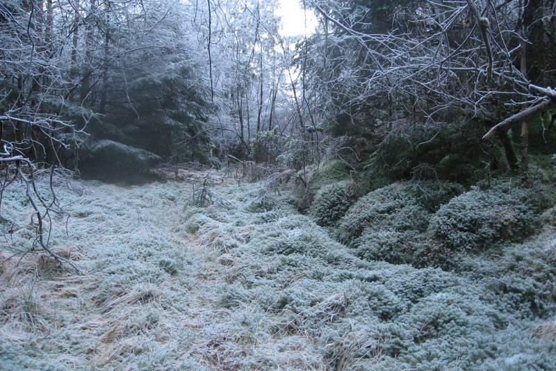 Den gamle skogsveien i Solheimsdalen