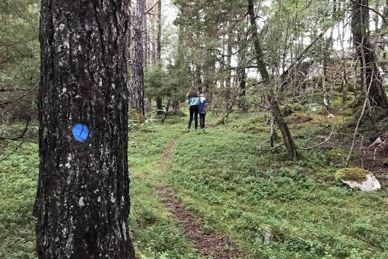 Stien går vidare til Erikstadbrua i vestre enden av vatnet, gjennom både furu- og granskog og snart ut på bilveg