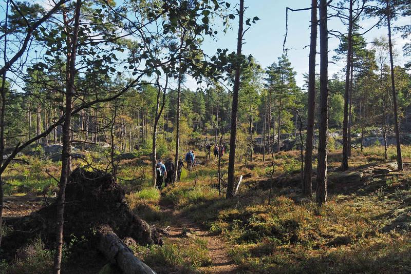 Fint skogsterreng før Krysstjern
