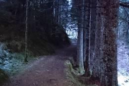 Aleen mellom Øvre Botten og Almås -  Foto: Rita Mathisen