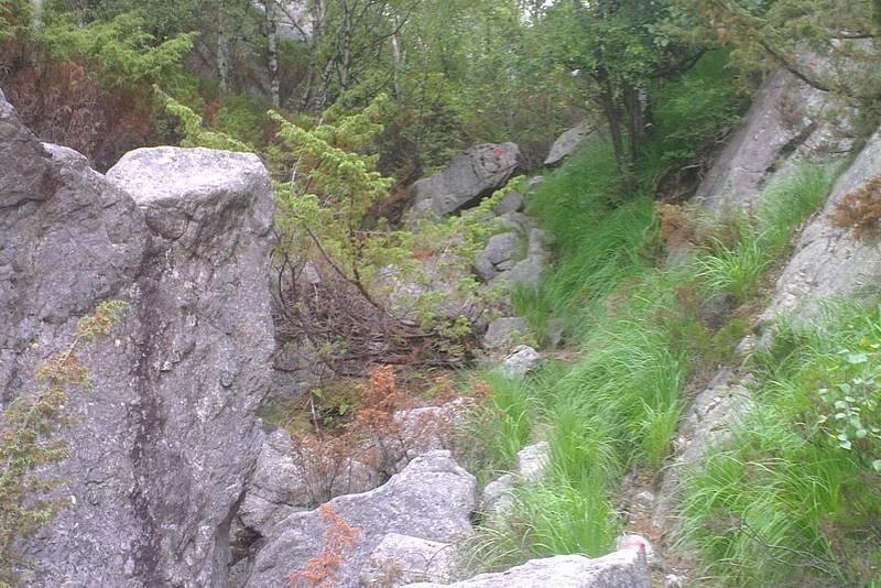 Fra Alsvik går man i lett skog og i litt steinur