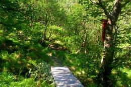 Fyrste del av turen er de litt skog. - Foto: Svenn-Petter Kjerpeset.