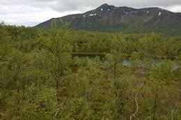 Gapahuk ved Lomtjønna - Foto: Frank Holdal