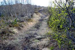 Veien til Pollvatnet - Foto: Tursiden for Bodø og Salten