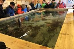 Akvarium i Alvøen - Foto: Bjørn Hellesøe