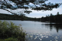 Igletjern innbyr til fiske og padling - Foto: