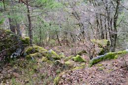 Nærbilde av steinbarrikaden i skaret opp til platået. - Foto: Ukjent
