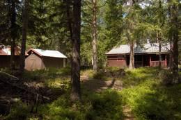 Svartskogkoia - Foto: Steinar Østlie