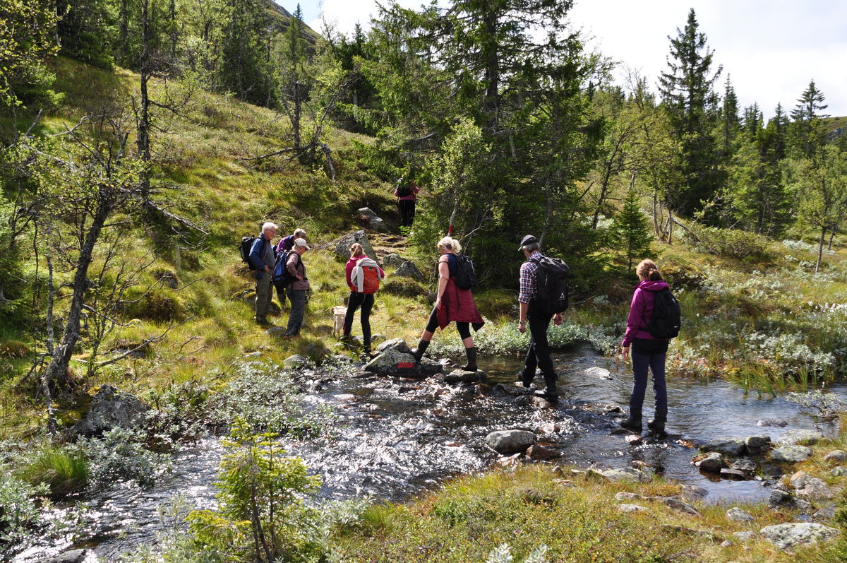 Stien til Strøslifjell går gjennom idyllisk landskap