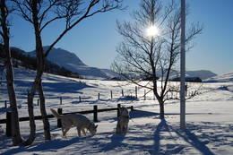 Utsikt mot Svarthetta - Foto: Asgeir Våg