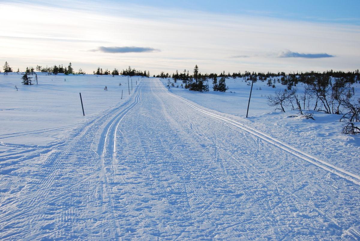 Løypa mellom Kollmyrkampen og Stenfjellhytta