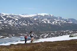 Nesten på Meskardet -  Foto: Foto: Stig Bakke