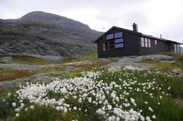 Myrullen vaier i vinden foran Holmavatnhytta -  Foto: Kjell Helle-Olsen