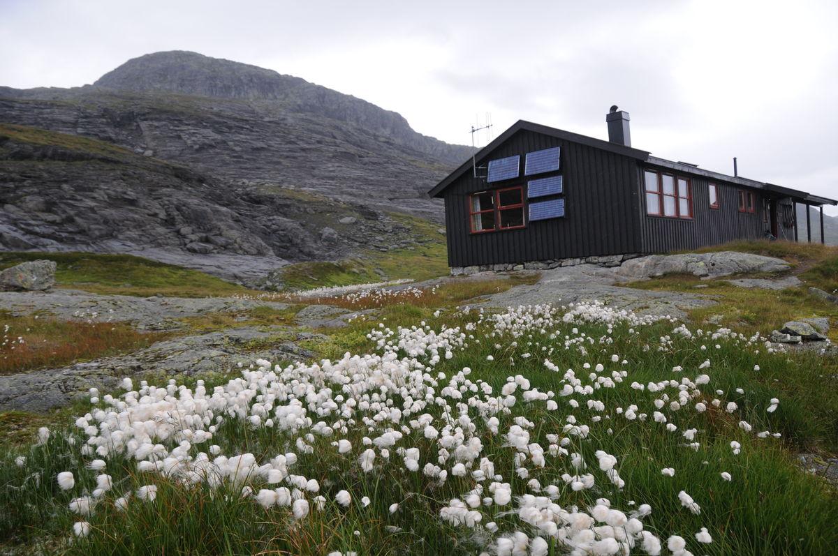 Myrullen vaier i vinden foran Holmavatnhytta