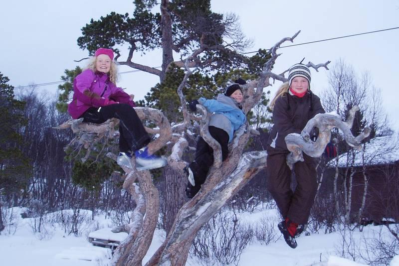 Mange barn har hatt glede av det fantastiske klatretreet rett utenfor hytta. NB! Ta ikke grener til bål fra de flotte furutrærne i området.