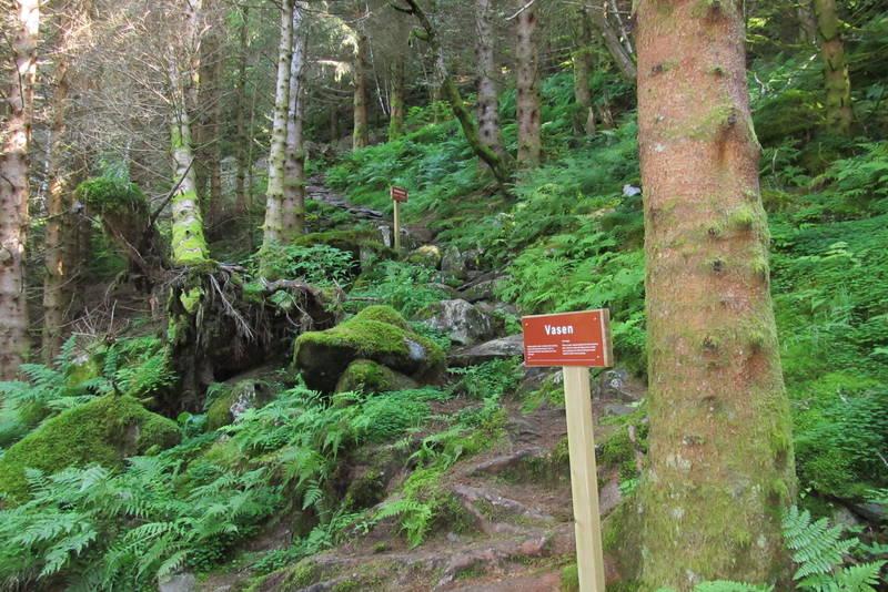 Historiske skilt i granskogen i lia mot Fjellstøl