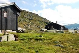 Tjørnbrotbu - Foto: Tor Berg