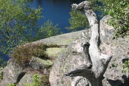 Flott gammel treskulptur på Tverråsen. Tverråsvannet under. - Foto: Anne Gallefos Wollertsen