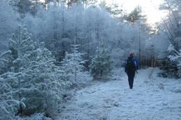 Rett før skogsveien slutter - Foto: Ukjent