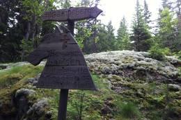 Gampeberget - Her jaget bamsen sitt matbytte... -  Foto: Knut Lysell