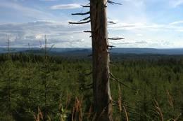 Med utsikt over landskapet - Agåsen -  Foto: Elisabeth Hansen