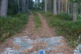 Traktorveien -  Foto: Stig Tore Aaberg