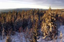 Utsikt fra Svarttjernshøgda -  Foto: Sondrekv