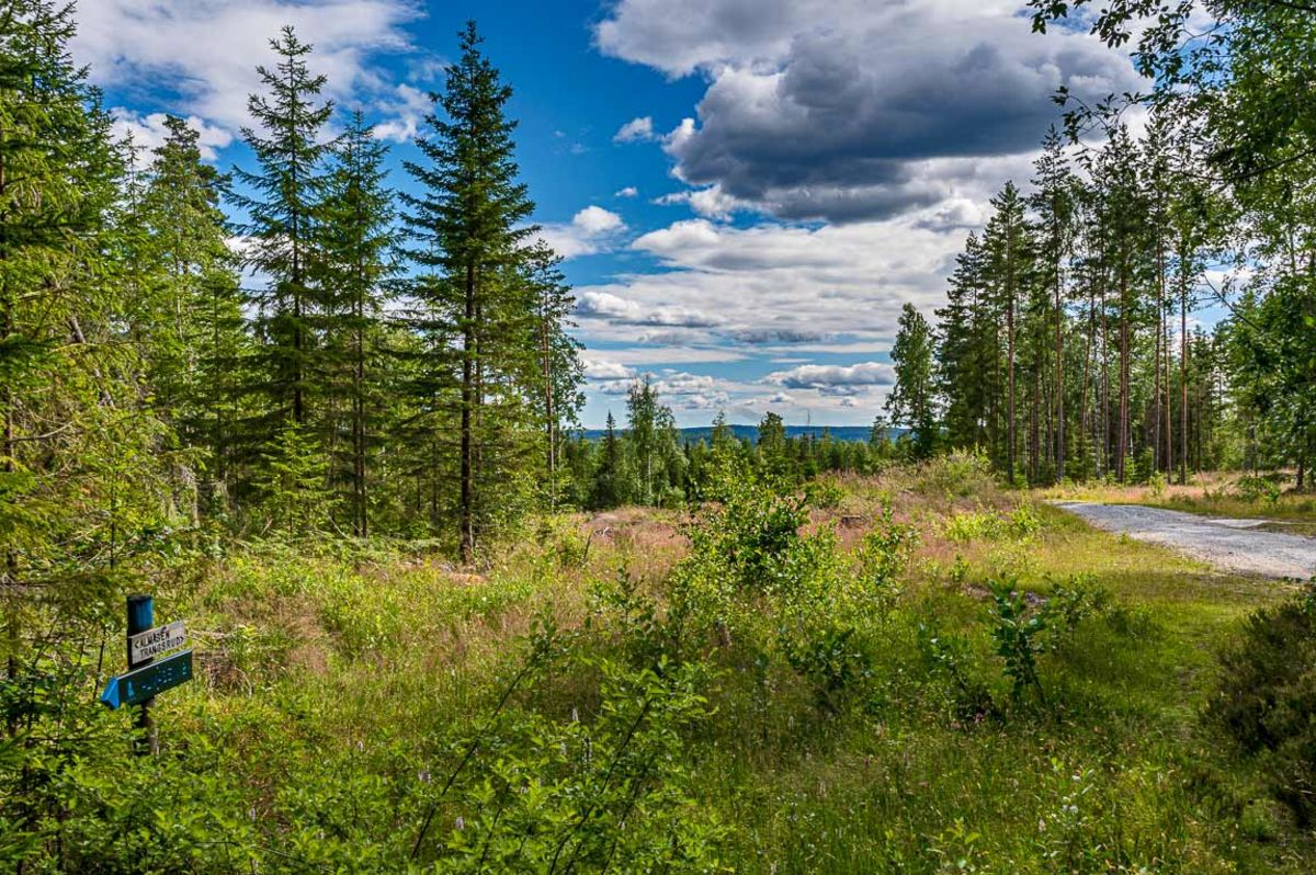 Stien over Almåsen ender i en skogsvei