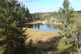 Lite vann mellom Lauvåsen og Svartevann -  Foto: Leif Liodden