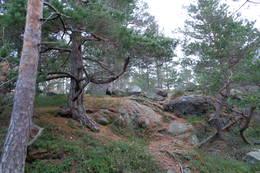 Bygdeborgen på Sandvin -  Foto: Jorunn Monrad