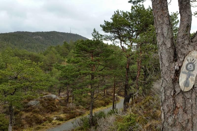 Stien opp frå Torvmyrane skule med masta på toppen av Brandsøyåsen