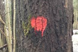 For det meste er løypa merket med rød maling - Foto: Ukjent