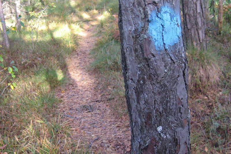 På turkartet Rossevannet finner du alle stiene som er merket med blått.