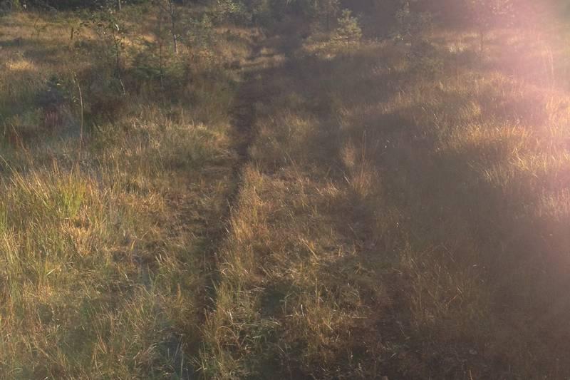 Midt på Jerusalemsmyra følger du denne veien til venstre rett frem til du ser Støletjønn