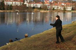 Ved Tveitevannet er det mange ender som kan mates - Foto: Øyvind redigert av Bård