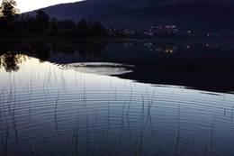 Ringer i vannet -  Foto: Arvid Hagen