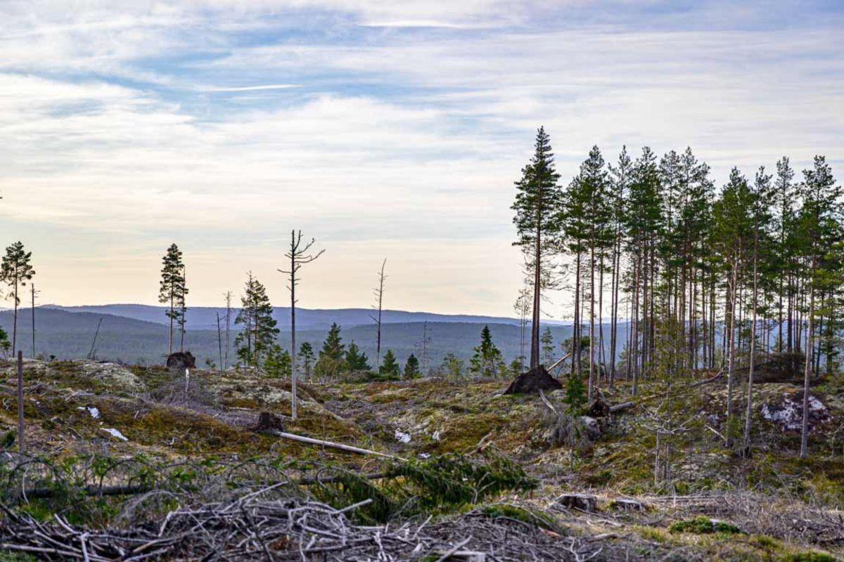 Utsikt ved Høgåsen