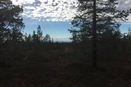 Lang utsikt - Foto: Margrete Ruud Skjeseth
