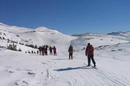 Skitur i Lifjell  - Foto: Telemark Turistforening