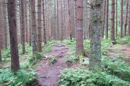 Gjennom skogen følger du de blå merkene - Foto: Dag Olav Brækkan